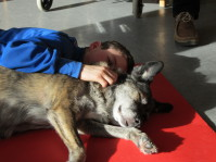 Hunde und Mensch liegen eng nebeneinander am Boden